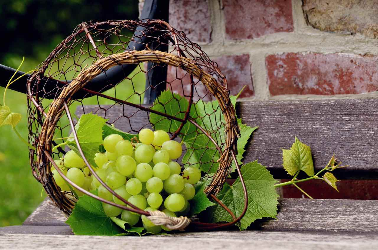 foto-weingut-hercher-grapes-4841973-1200