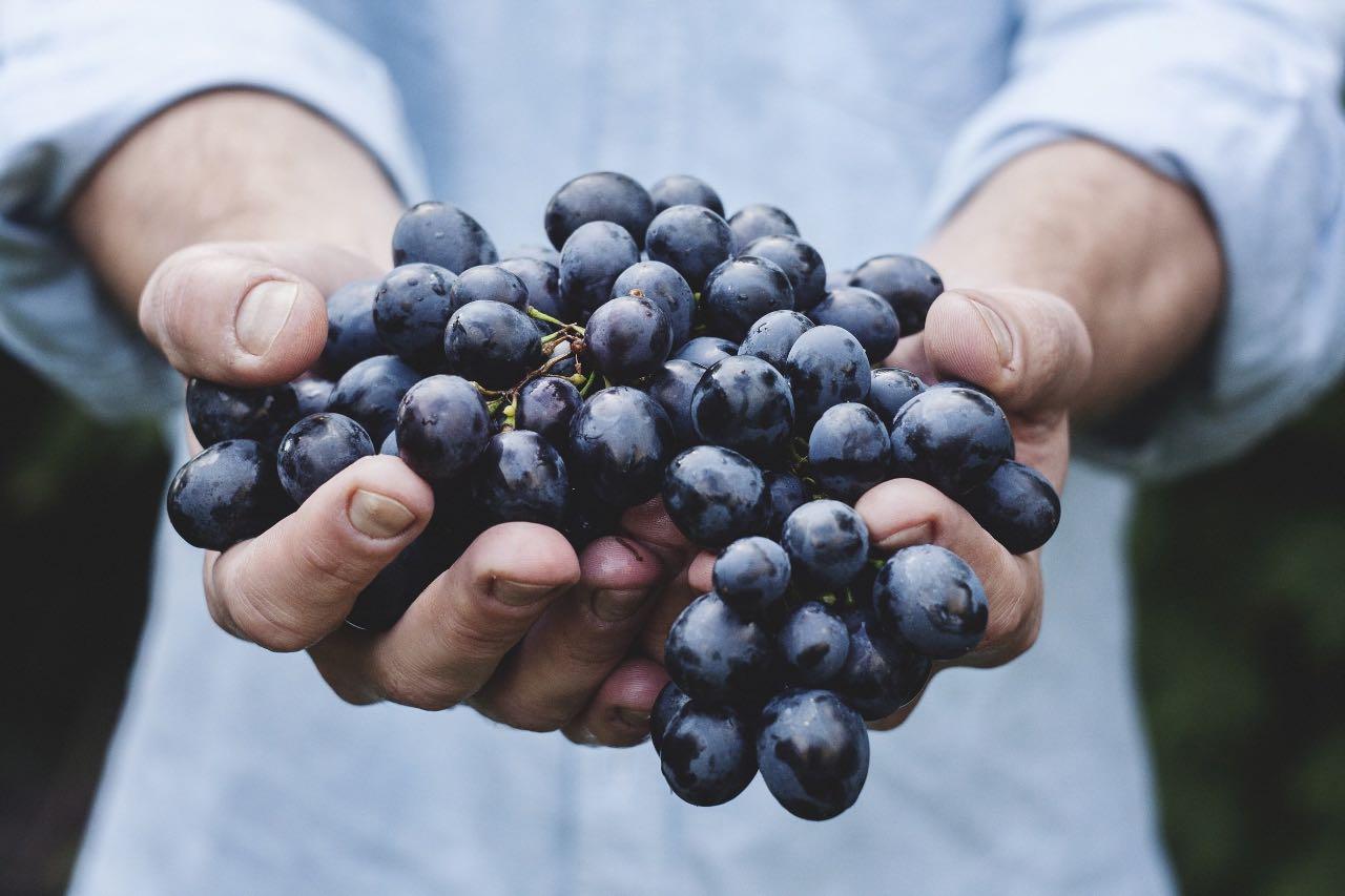foto-weingut-hercher-grapes-690230-1200