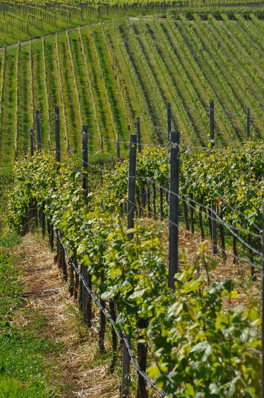 foto-weingut-hercher-wine-406278-1200