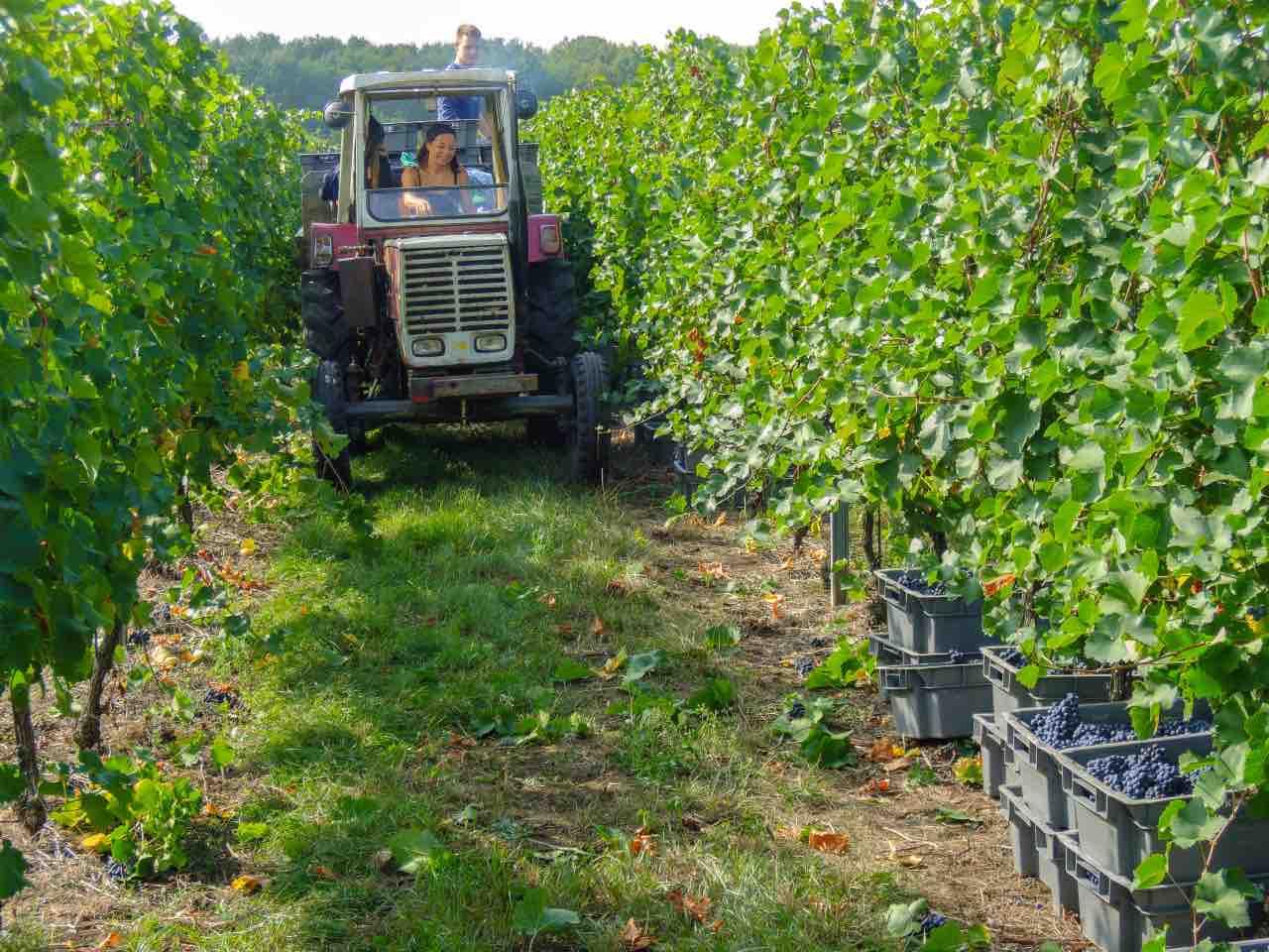 foto-weingut-hercher-wine-957996-1200